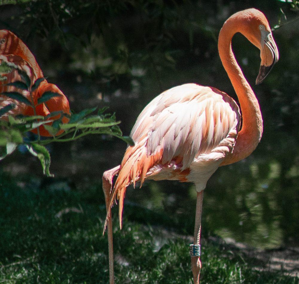 1024-flamingo